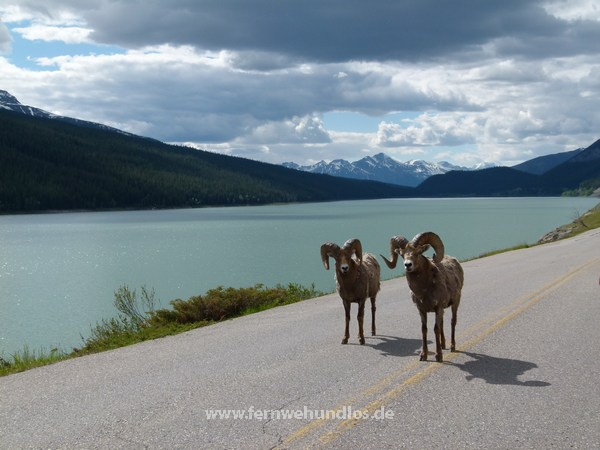 b_0_0_3549_10_images_stories_Nordamerikafotos_kanada-us-bilder_101__JasperNP.jpeg