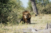 chobe-nationalpark