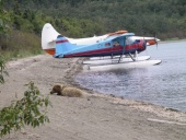 Katmai_Bearviewing