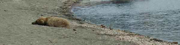 2139_Katmai-Brooks Camp_cr
