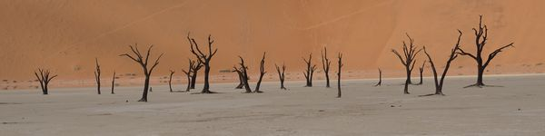 5474_Deadvlei_cr