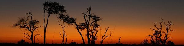 0350_Moremi-Game-Reserve_cr