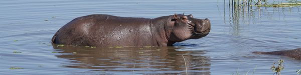 0459_Moremi-Game-Reserve_cr