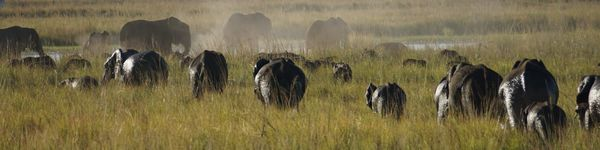 2863_Chobe-Nationalpark_cr