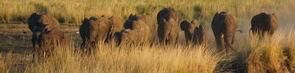 3006_Chobe-Nationalpark_cr_cr