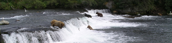 2142_Katmai-Brooks Camp_cr