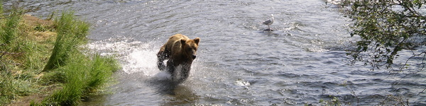 2530_Katmai-Bearviewing_cr