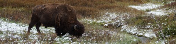2565_Yellowstone-NP_cr
