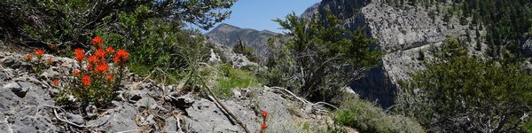 6582_Cathedral-Rock-Trail_Mt-Charleston_cr